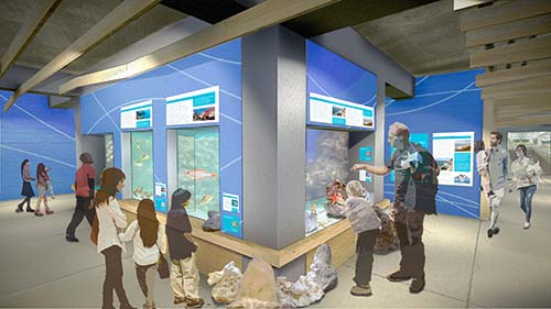 Rendering of interior exhibit space with aquariums and interpretive graphics